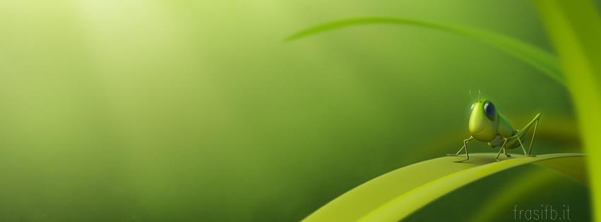 Copertina facebook grillo verde una copertina con immagine di un una copertina realizzata con immagine in grafica digitale computerizzata du un grillo tra il fogliame molto simpatica e originale per il suo effetto thecheapjerseys Image collections