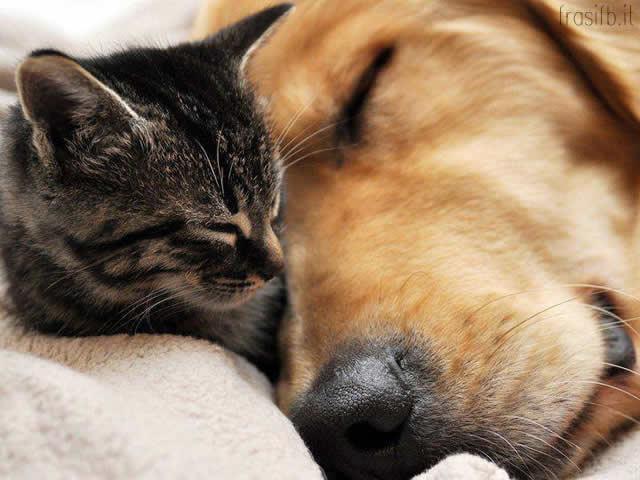 Top Immagini di cani e gatti per Facebook - Foto e immagini con frasi  FV73