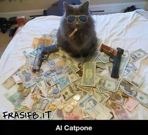 Gatto Come Boss Al Capone Frasifb It