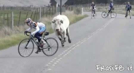 toro-rincorre-ciclista.jpg